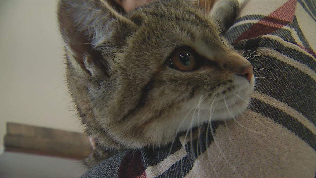 Purrfect Day Cafe gets more than 2,000 cats adopted in 16 months