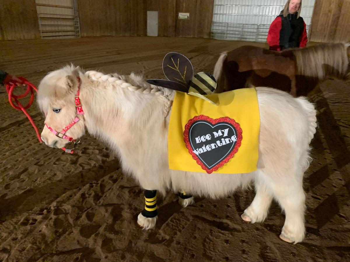 mini horse v day 5 kk 2-3-20.jpeg