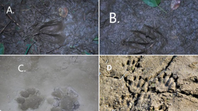 POP QUIZ: Can You Name All 4 Animal Tracks?