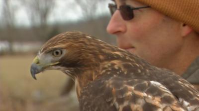 LMPD falcon