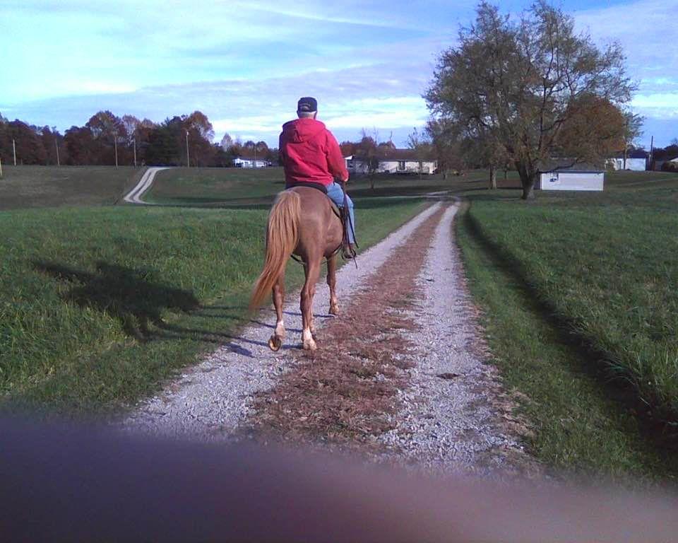 Etown Horse 1