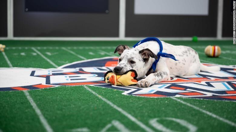 Puppy Bowl XVII-CNN.jpg