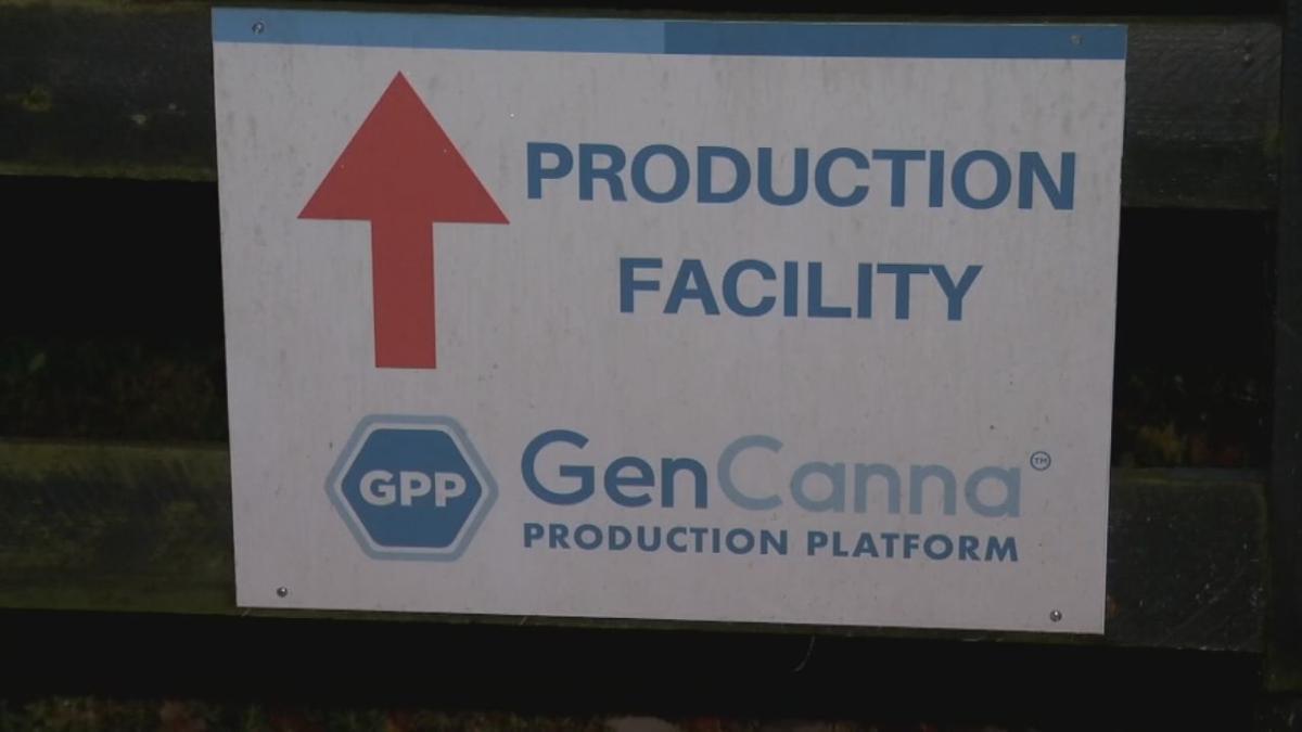 Hemp Plant Fire - GenCanna Sign