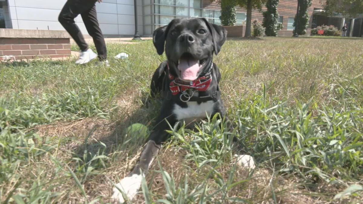 UofL Health therapy dog Roo.jpeg