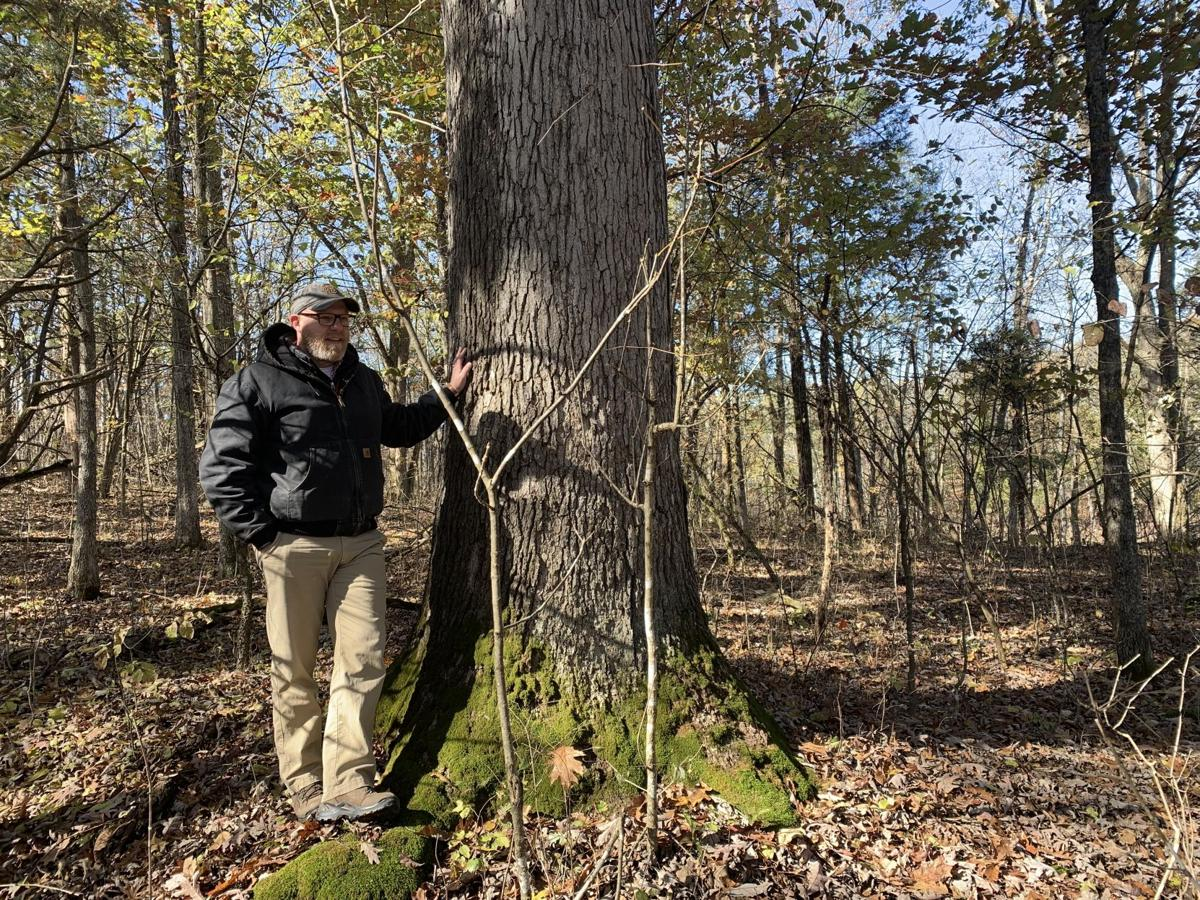 Maker's Mark White Oak Tree