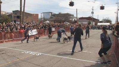 Goats and beer take over Market Street for 3rd annual NuLu Bock Fest