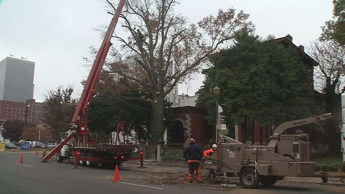 Old Oak Tree Chopped Down
