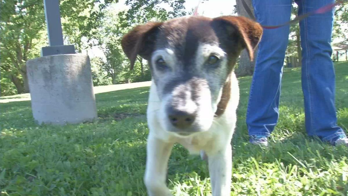 Army the dog returned to his Oldham County family after being missing for five years.
