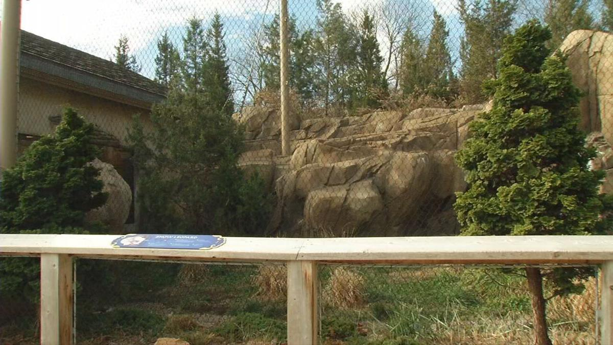Louisville Zoo snow leopards currently off exhibit