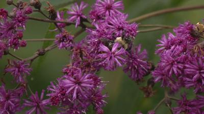 Flowers at Bernheim Forest