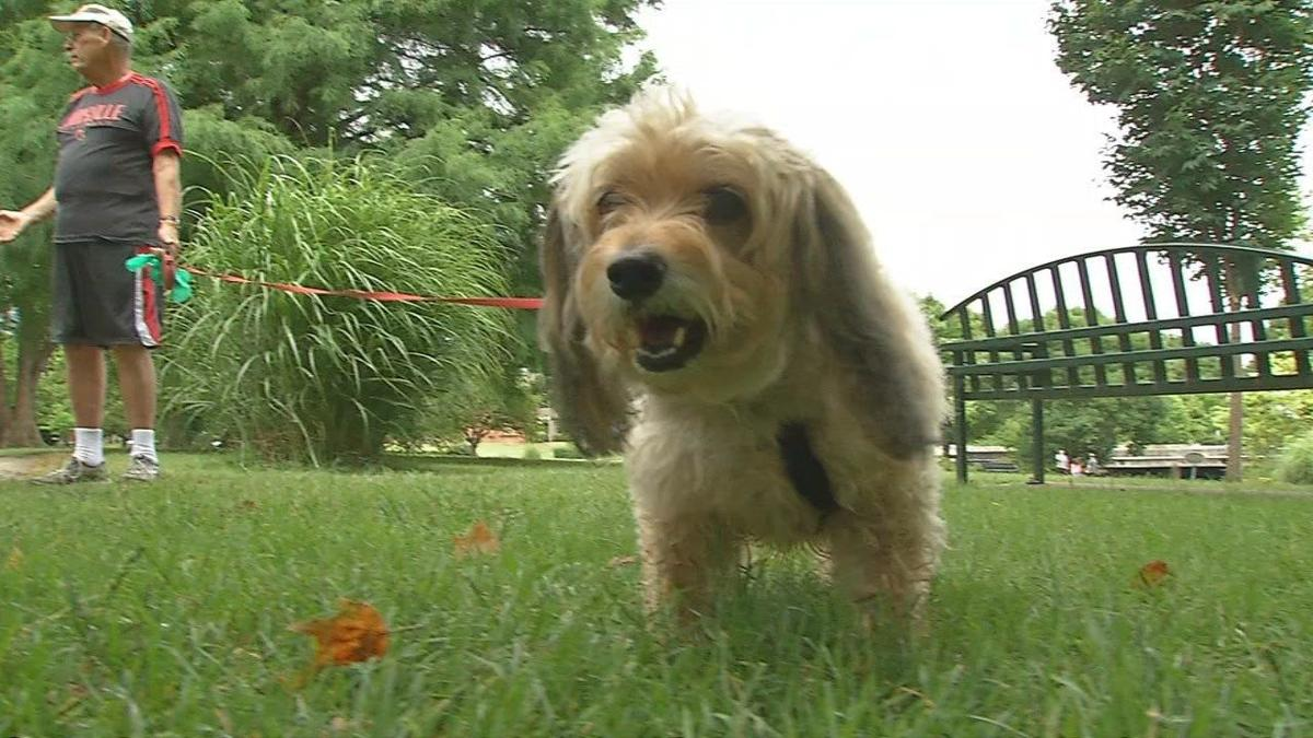 Veterinarians warn dog owners of need for yearly dog flu booster shot