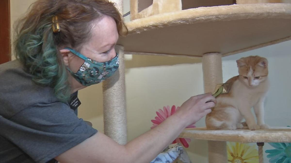Fox show, Call me Kat creates frenzy at Louisville cat cafes