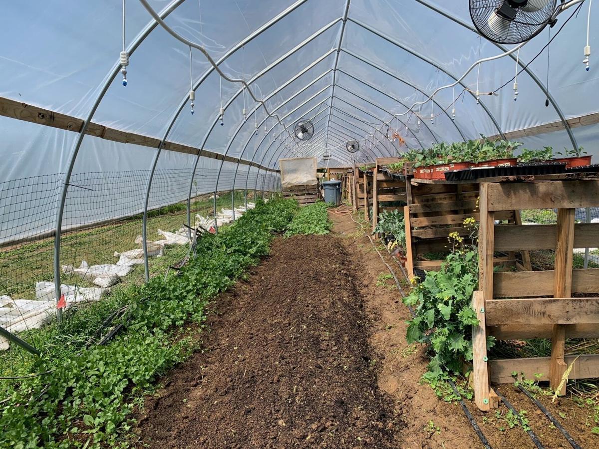 In Season Farms