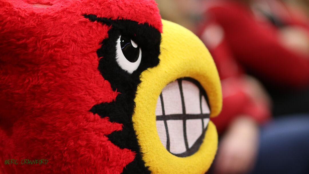 Cardinal bird generic
