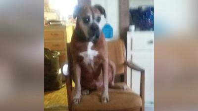 Owners upset after Southern Indiana shelter euthanized microchipped dog