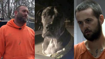 Armed Louisville homeowner holds off suspect with gun and 150-pound Great Dane named 'Tank'