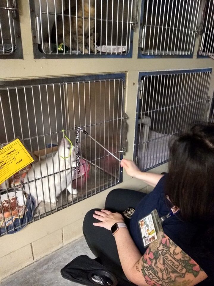 KHS-Volunteers read to animals during 4th of July-FB post-8.jpg
