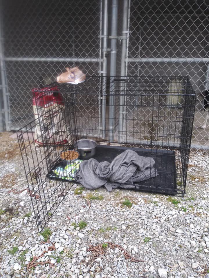 DOG LEFT OUTSIDE SHELTER DIES 5pVO