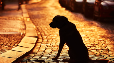 Silhouette of dog alone on street