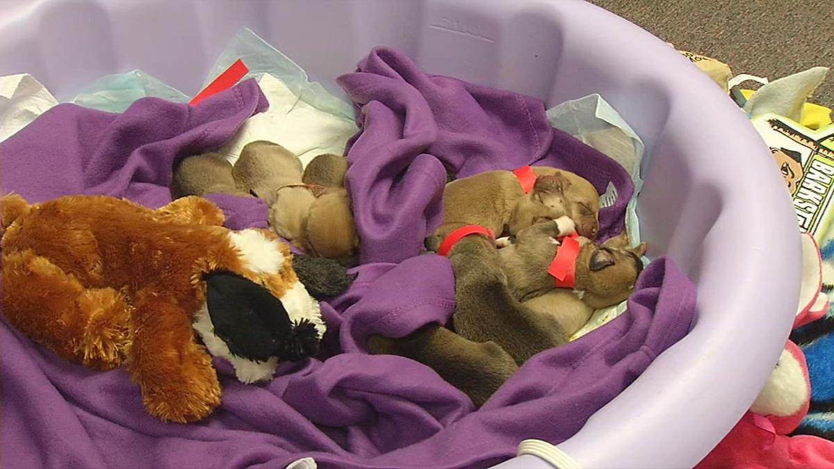 PUPPIES TOSSED IN RAVINE 6PKG.transfer_frame_0.jpg