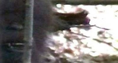 VIDEO PROOF? Bigfoot lives in the woods of Kentucky
