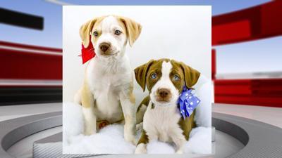 Puppy Valentine's Day
