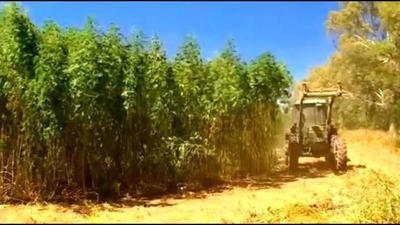 Comer says DOJ ruling means KY can produce hemp