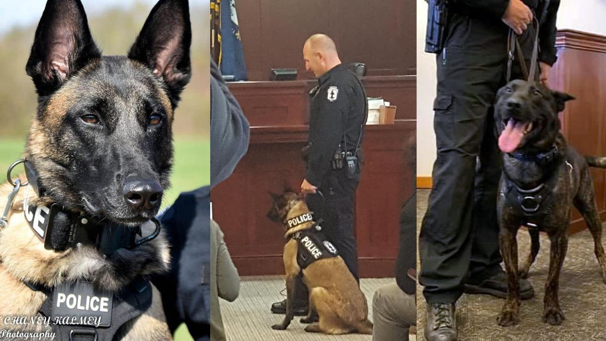 (Left and Center) Shelbyville Police Department's K-9 'J.C.' (Right) LMPD K-9 Hondo