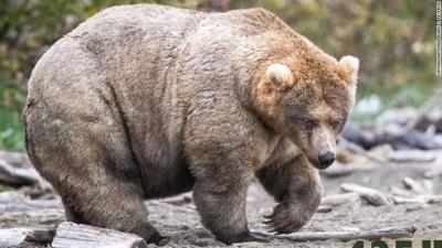 fat bear week 2019 cnn.jpg
