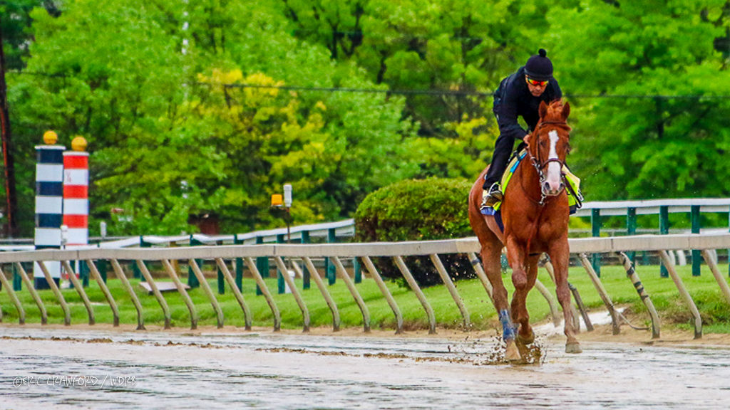Justify at Pimlico