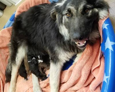 KHS-Mama Bear and puppies 6-29-21.jpg