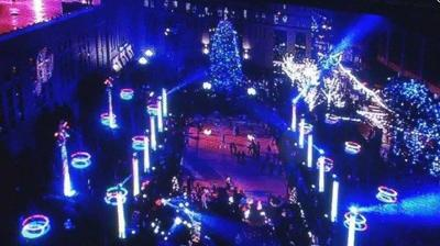 City looking for tree for 'Light Up Louisville'