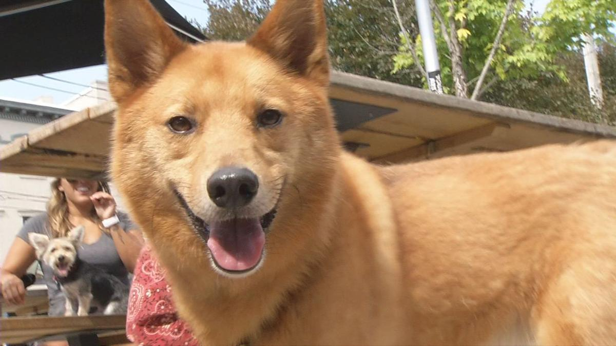 Dog Restaurant Week in Louisville kicks off with 'Yappy Hour