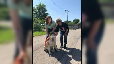 Dog who went missing after crash is reunited with his owner