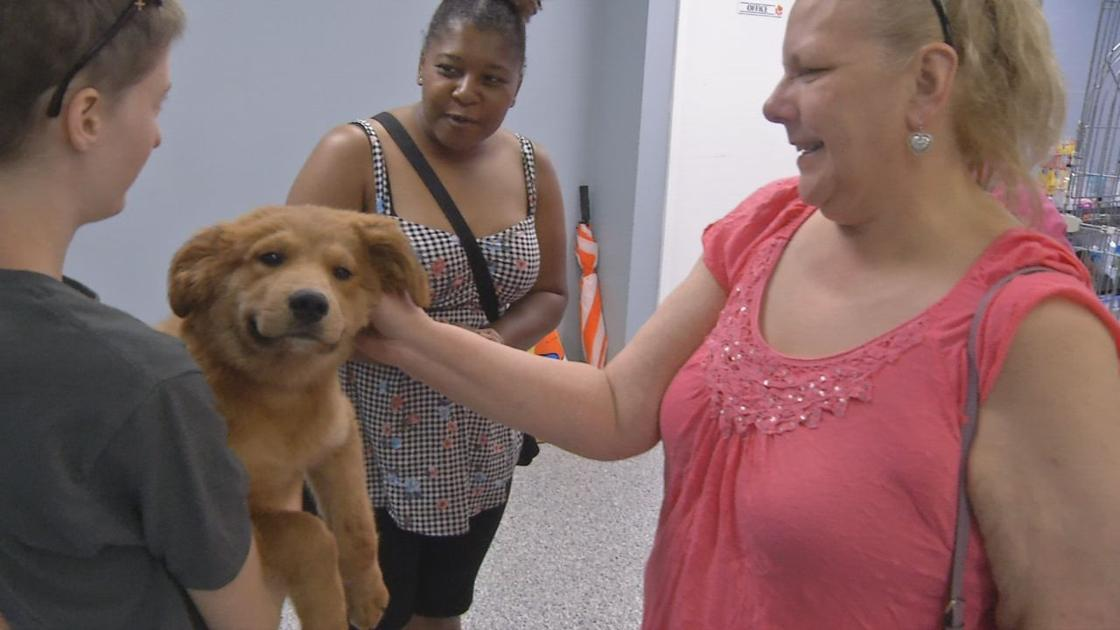 Louisville Metro Animal Services Waives Redemption Fees Through End