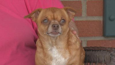 Louisville woman finds neighbor's missing dog hiding in her