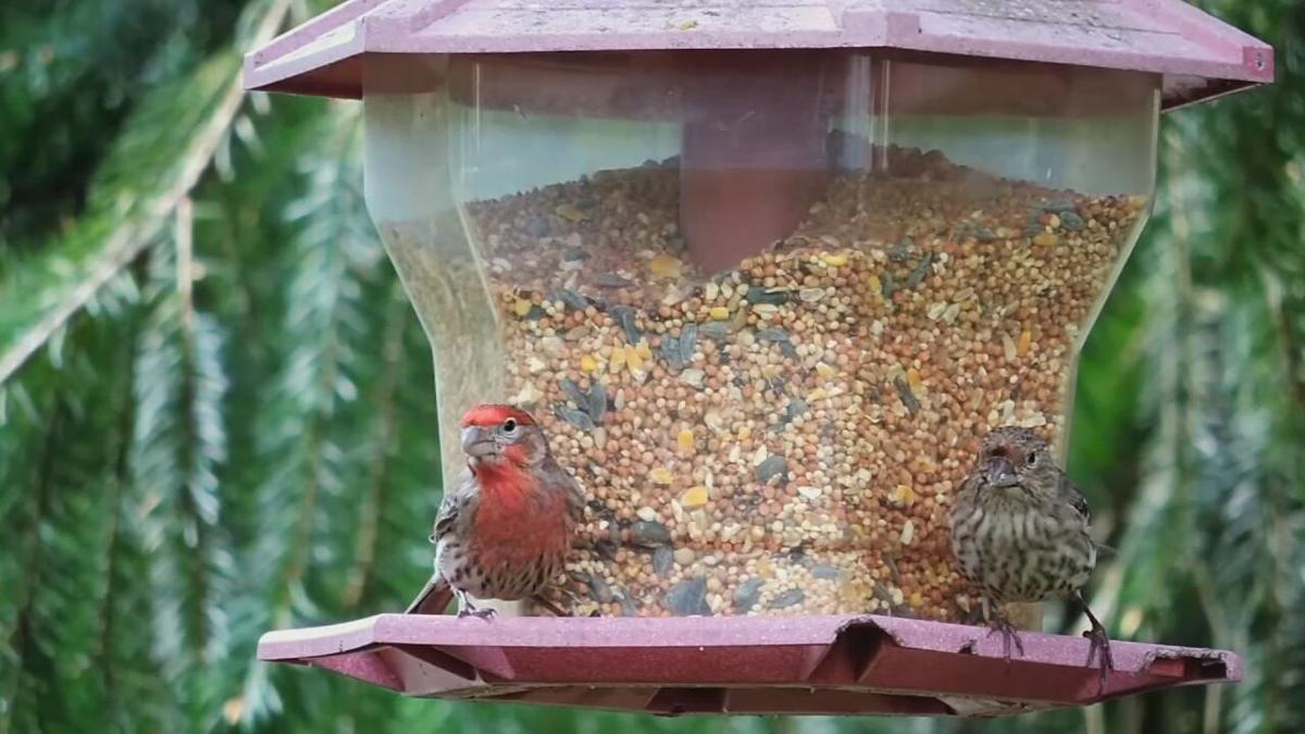Birdfeeder generic (2).jpeg