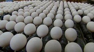 200 million eggs recalled because of salmonella concerns