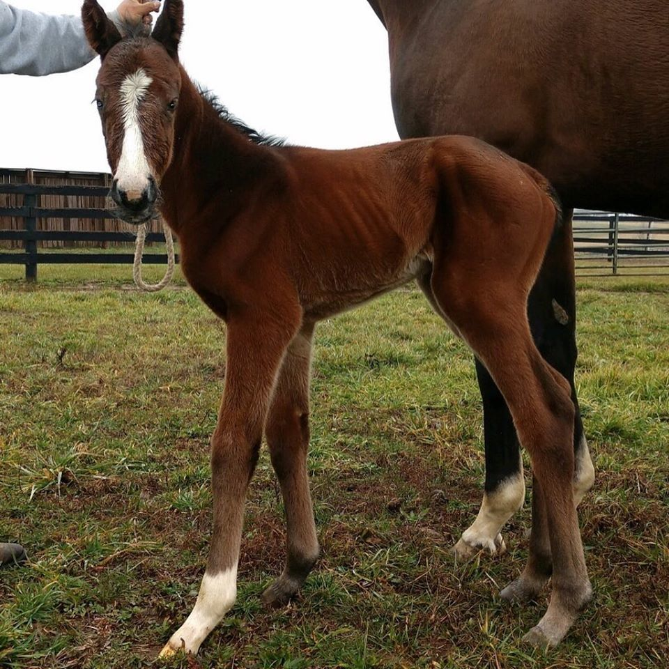 Justify first foal