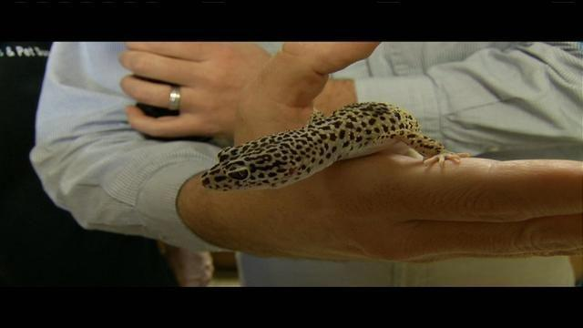 Lizards and snakes at the Reptile Breeders Expo | Morning