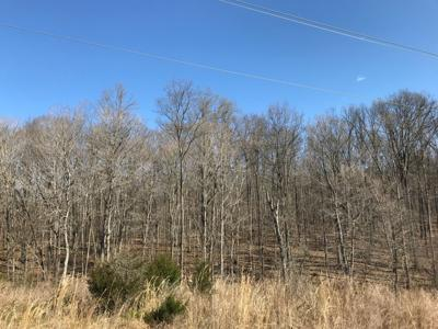 SUNDAY EDITION | Proposed LG&E pipeline cuts through Bernheim land, raises neighbors' concern
