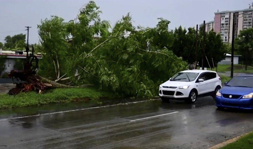 ISAIAS - Large tree toppled in Alto Trujillo, Puerto Rico