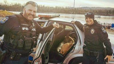LMPD rescues pair of goats from I-265 using BBQ-flavored Fritos