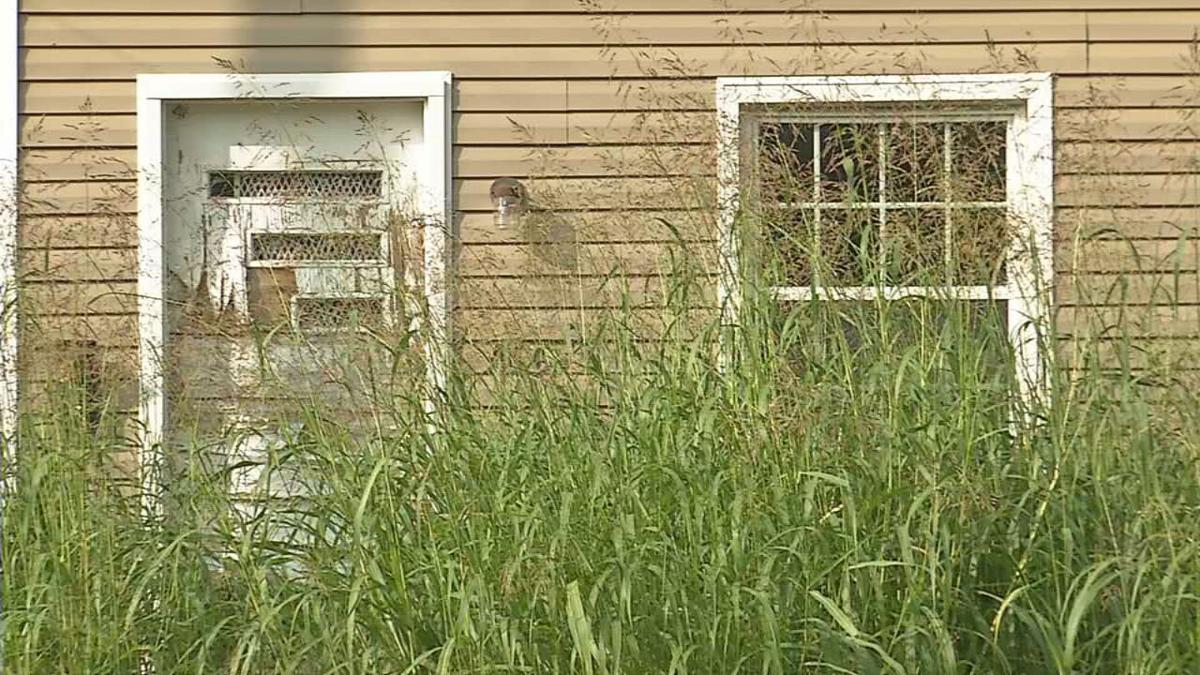 Tall Grass 2.jpeg