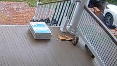 Squirrel steals pizza in New Jersey