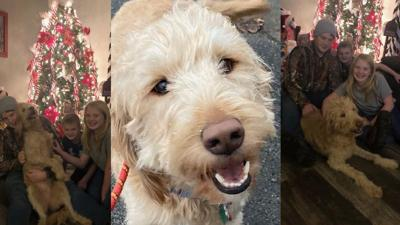 Lucy the stolen dog is reunited with her Lexington family