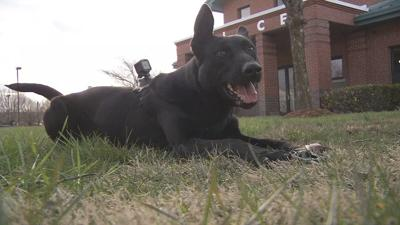 New Clarksville police dog's work leads to two arrests after first hour on patrol