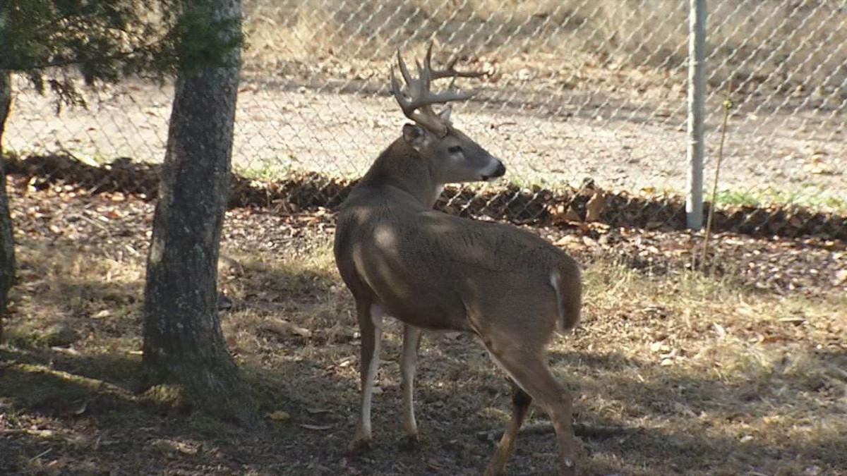 Deer poaching a big problem in KY