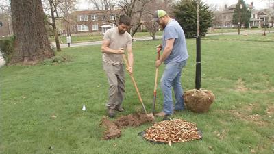 Trees planted in Chickasaw neighborhood