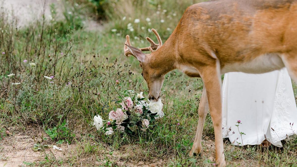 deer wedding crasher